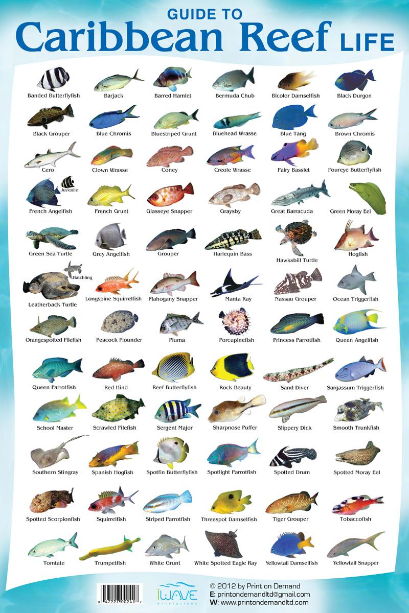 Coral Reef Fish Species Riviera Maya - Cancun