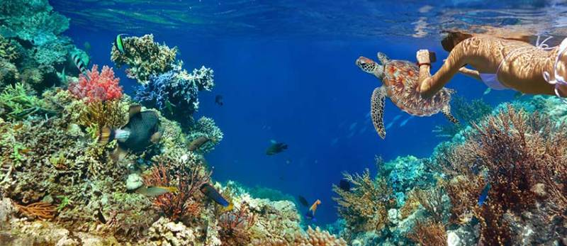 Tulum Snorkeling Riviera Maya