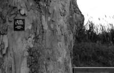 Tiziano Bellomi - in me cresce il ramo