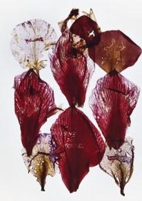 Anne & Patrick Poirier, Archives II, Ilfochrome, 2014, Galleria Fumagalli