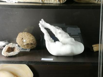 TAXIDERMI, photo courtesy Maila Buglioni