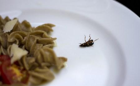 Insetti Cucina