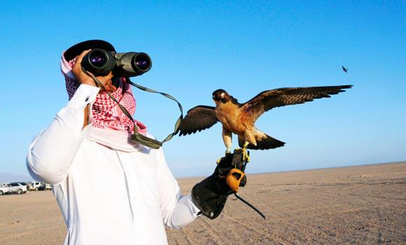 A Saudi man looks through a pair of binoculars before releasing his falcon during a falcon contest in a desert near Tabuk city, in this January 17, 2014 photo.
