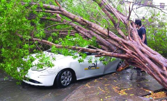 A rain-uprooted tree damaged a taxi in Aziziah, Jeddah, on Saturday.