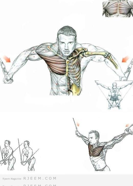 صورة توضيحية للعضلة المستهدفة
