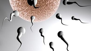 Photo of لمن ترغب في الحمل بسرعة اليك 11 نصيحة لحمل أسرع
