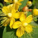 خاص  المتزوجين 10 نباتات لزيادة الرغبة الجنسية