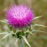 4 نباتات طبيعية لعلاج الاكزيما