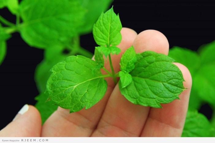 15 فائدة صحية لنبات النعناع
