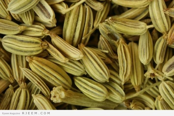 fenouil-graines