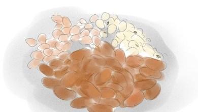 Photo of مؤشرات نقص الحديد في الجسم