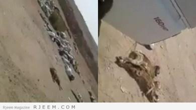 Photo of فيديو: حملة واسعة حول طبخ يمني لفطايس في مطعم بالقصيم