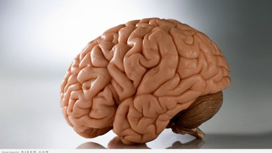 Photo of حيل سحرية لتنشيط الذاكرة.. هل تمارس تمارين المخ؟
