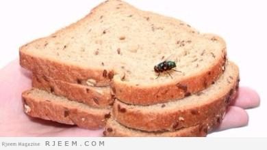 Photo of لهذا السبب تخلص فوراً من طعامك الذي لمسه الذباب