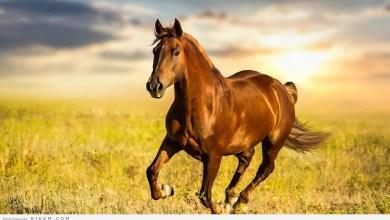 Photo of حصان يتسبب أزمة مرورية في محايل عسير!