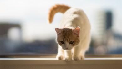 Photo of هل تعرفين مخاطر تربية القطط في البيت
