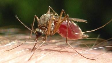 Photo of كيفية استعمال الدواء الطارد للبعوض في حالة الملاريا