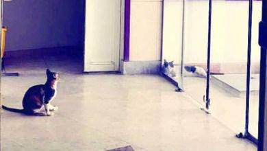Photo of بالصور: القطط تملأ ممرات وأقسام مستشفى في المدينة.. والمراجعون يروون معاناتهم