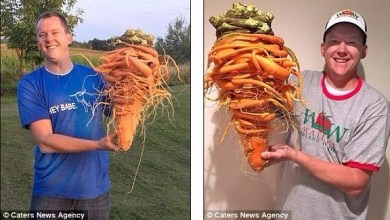 Photo of أمريكي يزرع أضخم جزرة في العالم بطول 60 سم