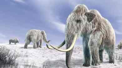 Photo of معلومات عن العصر الجليدي