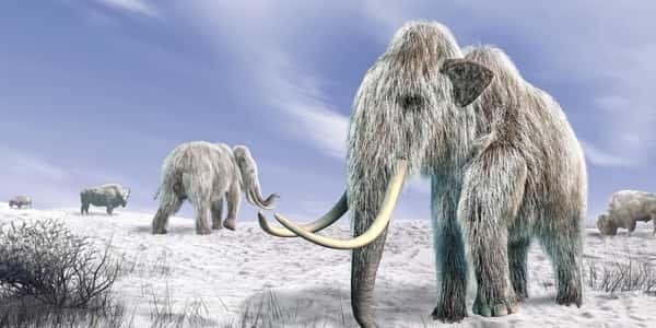 معلومات عن  العصر الجليدي