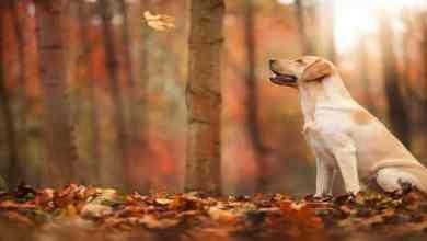 Photo of ماذا يحدث في فصل الخريف