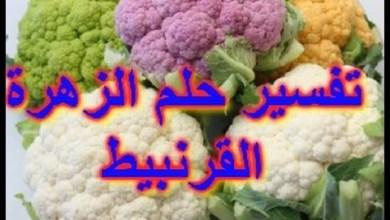 Photo of تفسير الحلم القرنبيط