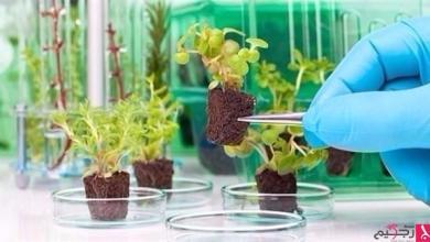Photo of الجيش الأمريكي يُطور نباتات ذكية للتجسس