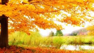 Photo of موضوع تعبير عن وصف الطبيعة في فصل الخريف