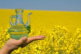 مزارع زيت الكانولا العضوي canola oil