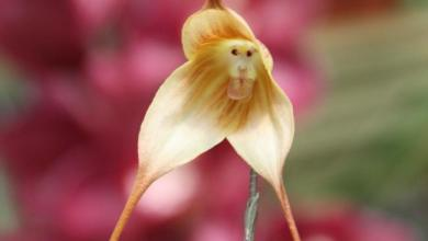 Photo of أزهار برية تشبه البشر والحيوانات (صور)