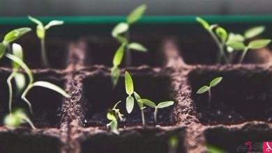 Photo of عالمة تطور نباتات تقاوم التغير المناخي والفيضانات والجفاف