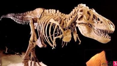 Photo of اكتشاف فصيلة تيتانوصورات جديدة