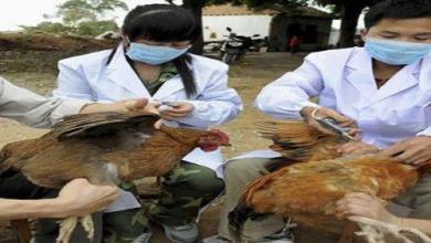 Photo of 4 إصابات بإنفلونزا الطيور في جدة والخرج والمزاحمية