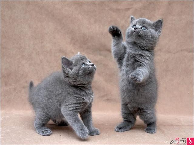 اجمل صور القطط
