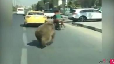 Photo of بالفيديو: نوع نادر من الدببة يقتحم الشوارع في العراق