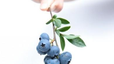 Photo of الفواكه الممنوعة لمرضى السكري