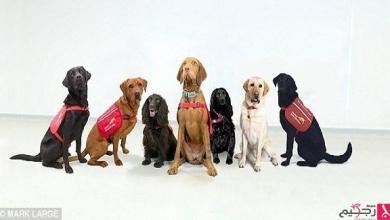 Photo of جمعية تستخدم الكلاب بتشخيص سرطان البروستات