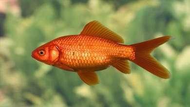 Photo of فائدة علاجية غير مسبوقة لحراشف الأسماك!