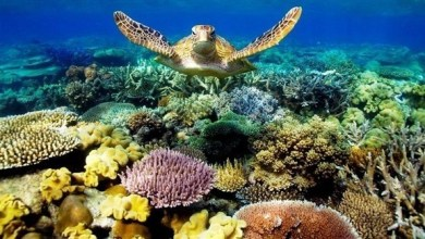 Photo of أستراليا تخصص 380 مليون دولار لحماية الحاجز المرجاني