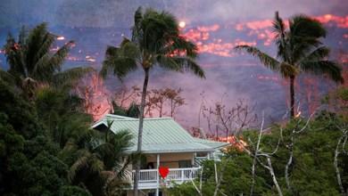 """Photo of """"سفينة نوح"""" تنقذ الحيوانات من بركان هاواي"""