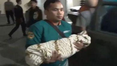 Photo of يعضّ طفله حتى الموت ليعبرّ عن حبه له