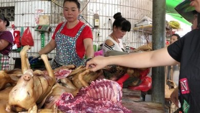 Photo of قانون ضد قتل الكلاب في كوريا الجنوبية