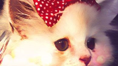 Photo of شعر عن القطط , قصائد مدح القطط , ابيات شعر عن قطتي الجميلة