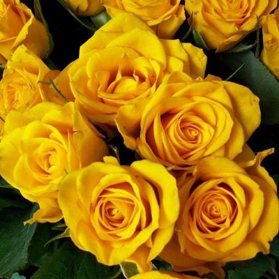 صور ورد اصفر رمزيات باقة ورد صفراء خلفيات ورد اصفر طبيعي