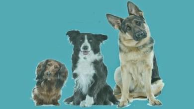 Photo of معلومات هامة قبل تربية الكلب