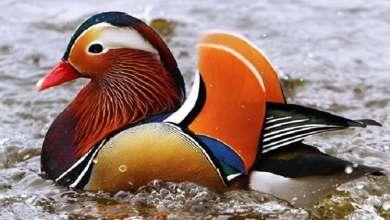 Photo of الصين.. اكتشاف نسخة جديدة من إنفلونزا الطيور!