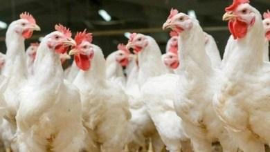 Photo of الإمارات تحظر استيراد أنواع الطيور ولحوم الدواجن من بلغاريا