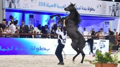 Photo of تغطية بطولة جمال الخيل العربية في جدة – عدسة خالد السفياني
