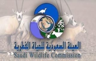 Photo of وظائف الهيئة السعودية للحياة الفطرية متنوعة في عدة مدن سعودية